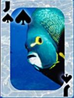 Tropicalcard