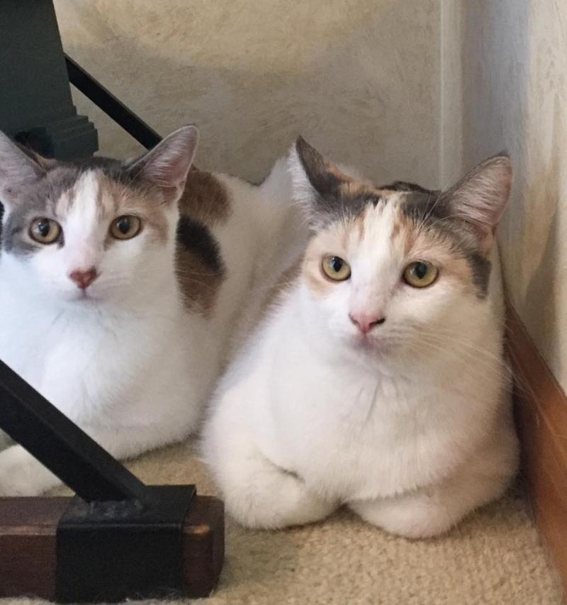 Kittens170826