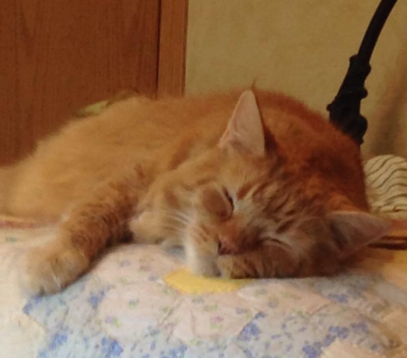Pumpkinsleep