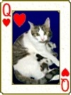 Catdeck3