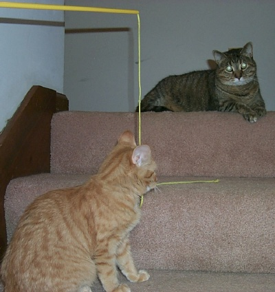 05cats2