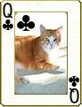 Catdeck1