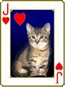 Catdeck2